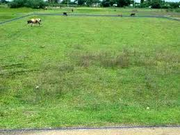 Agricultural land for sale in baluchetty chathiram | Kanchi